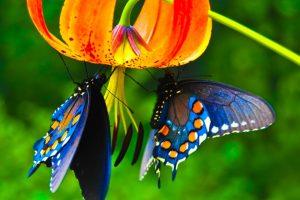 3d butterfly live wallpaper download