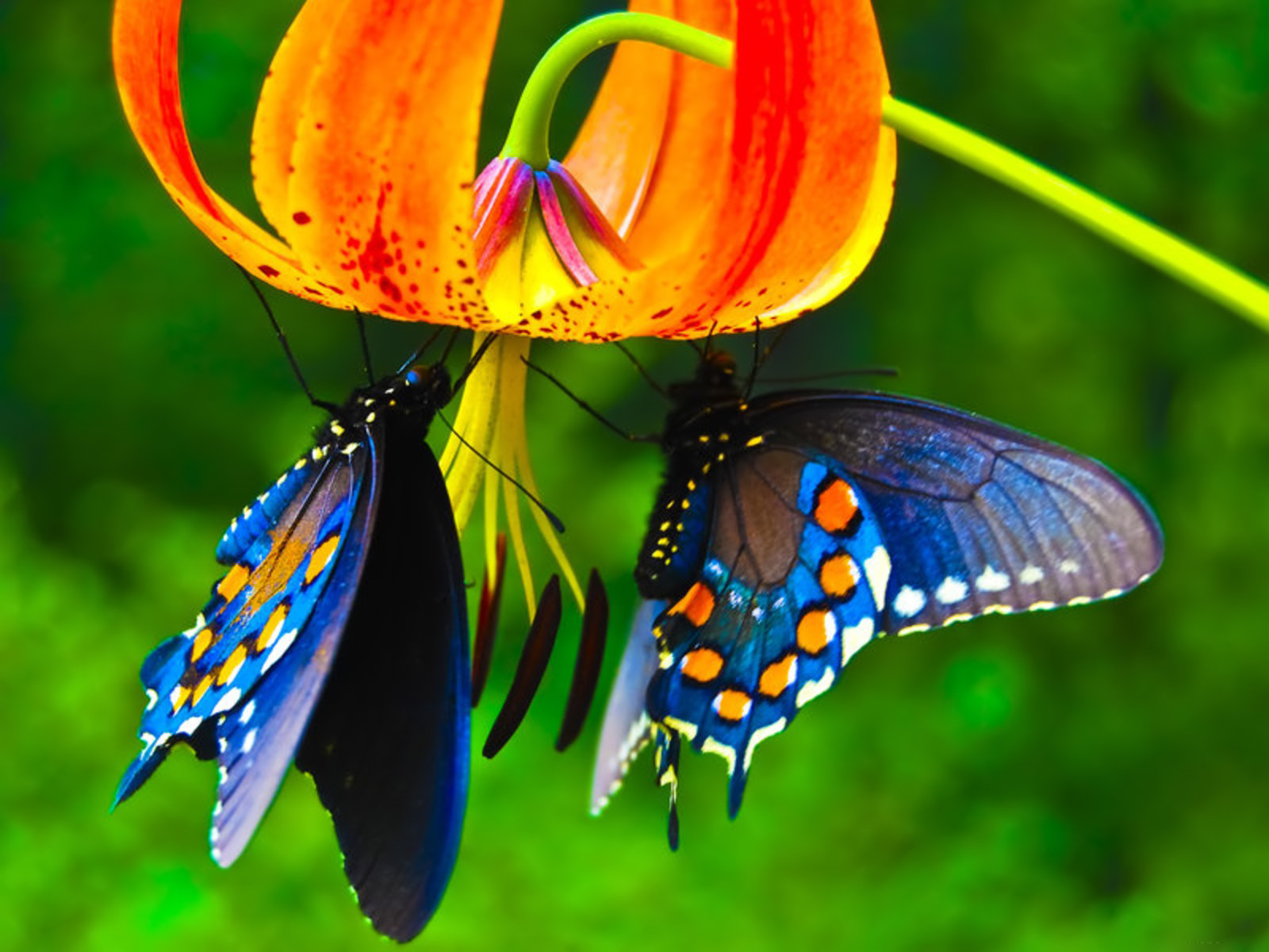 3d butterfly live wallpaper download