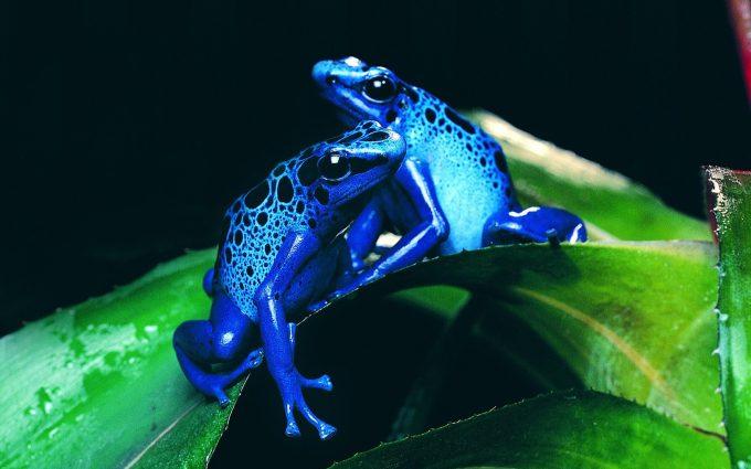 3d frog wallpaper