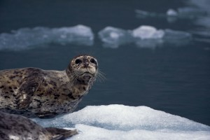 a picture of a seal