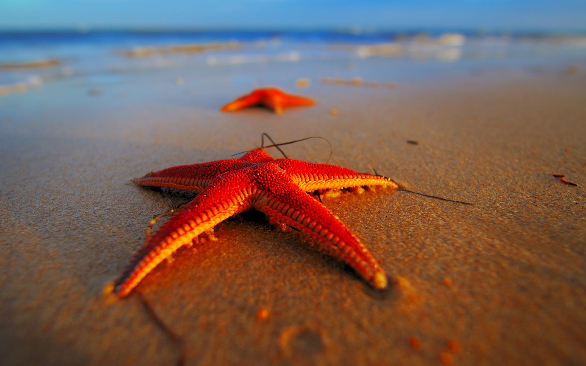 a star fish