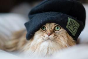 adorable kitten wallpaper