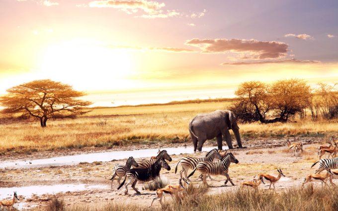 africa wallpaper animals