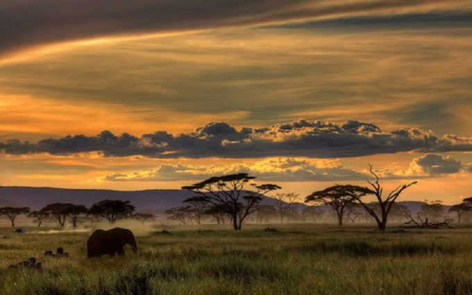 africa wallpaper cool