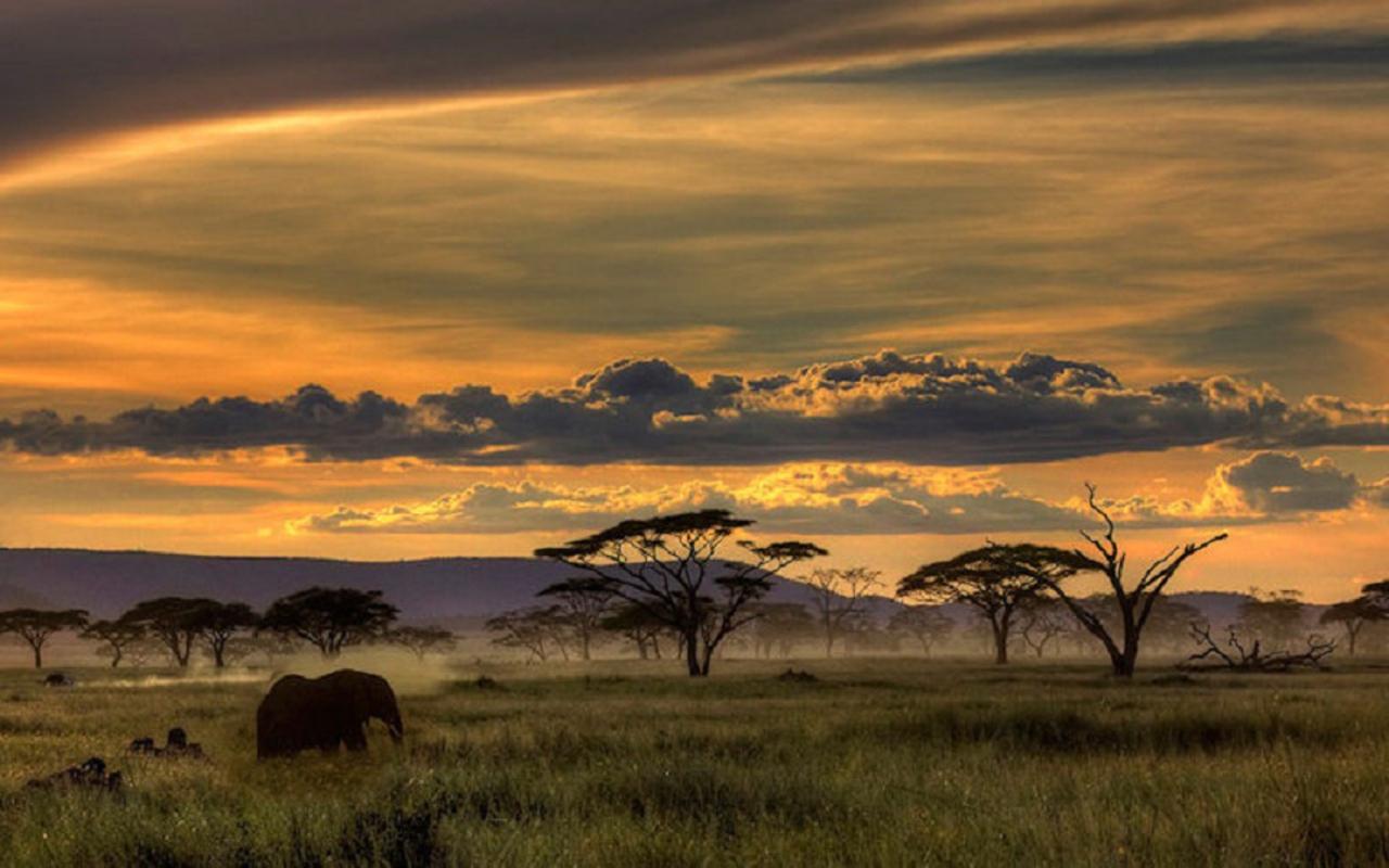 africa wallpaper cool