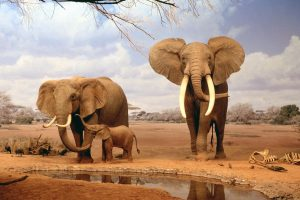 africa wallpaper elephants