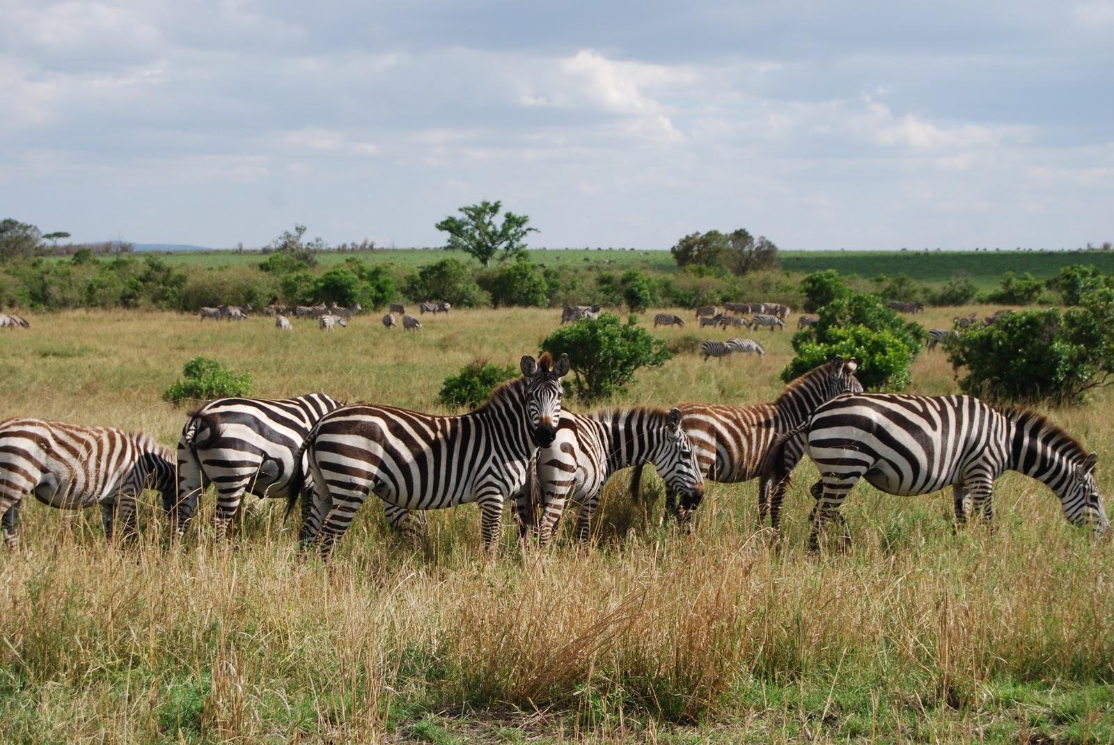 africa wallpaper safari
