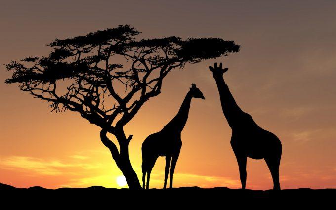 africa wallpaper sunset
