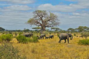 africa wallpaper wildlife