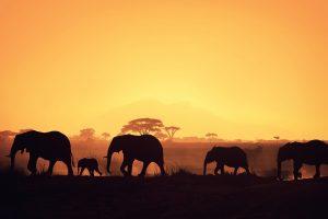 african safari sunset