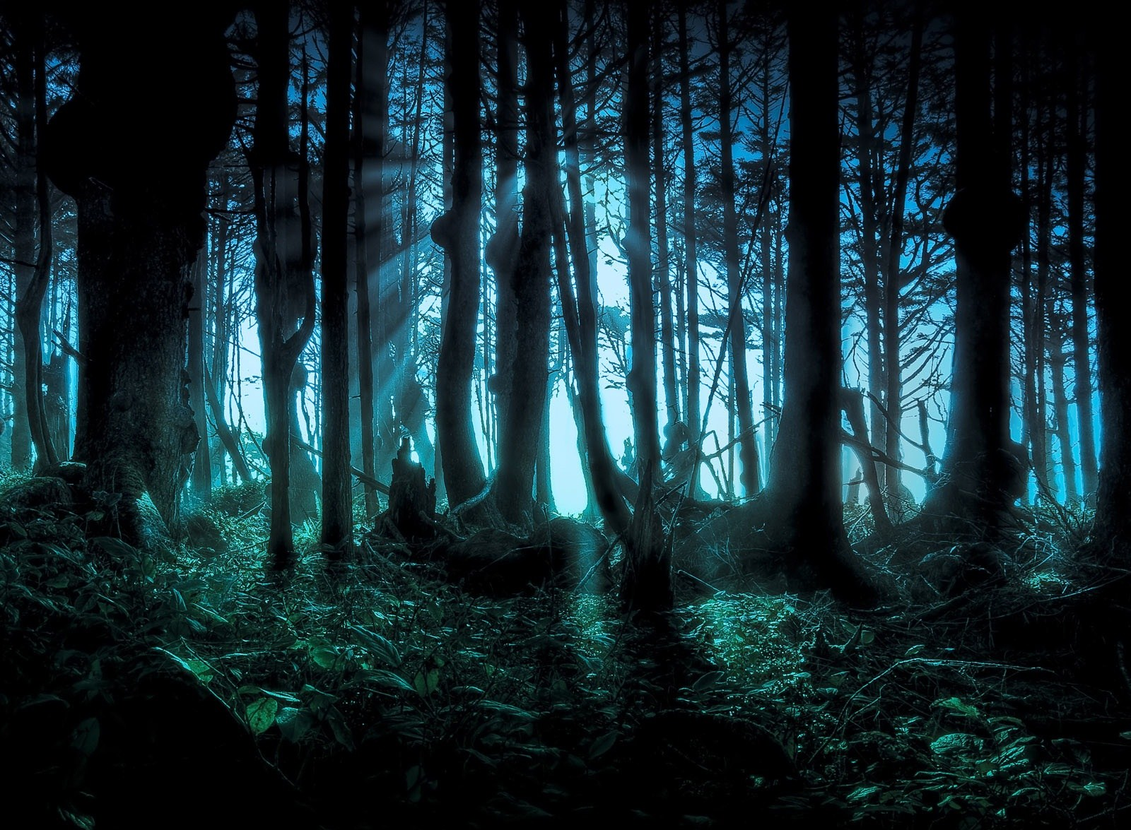 amazon forest wallpaper dark
