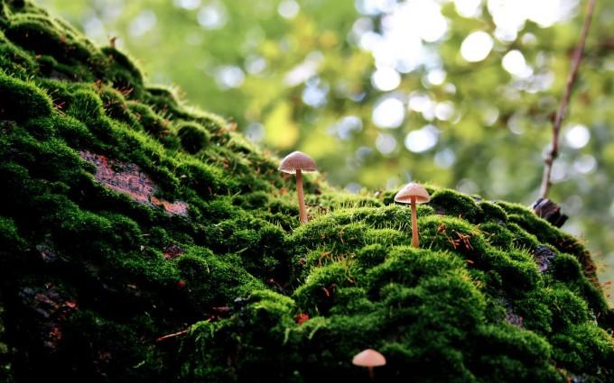 amazon forest wallpaper hd