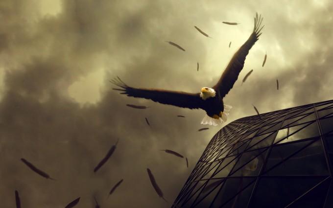 american bald eagle wallpaper