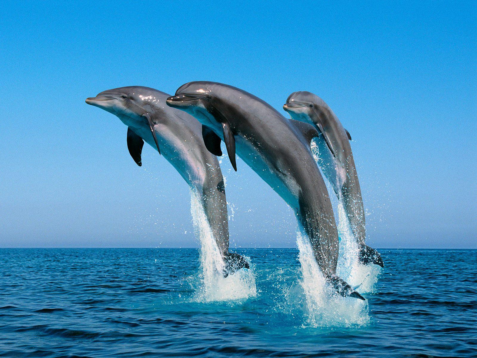animal background images