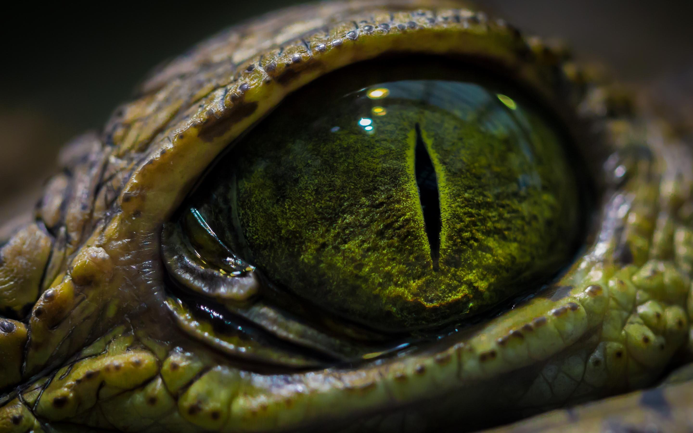 animal eye hd
