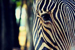animal eye images