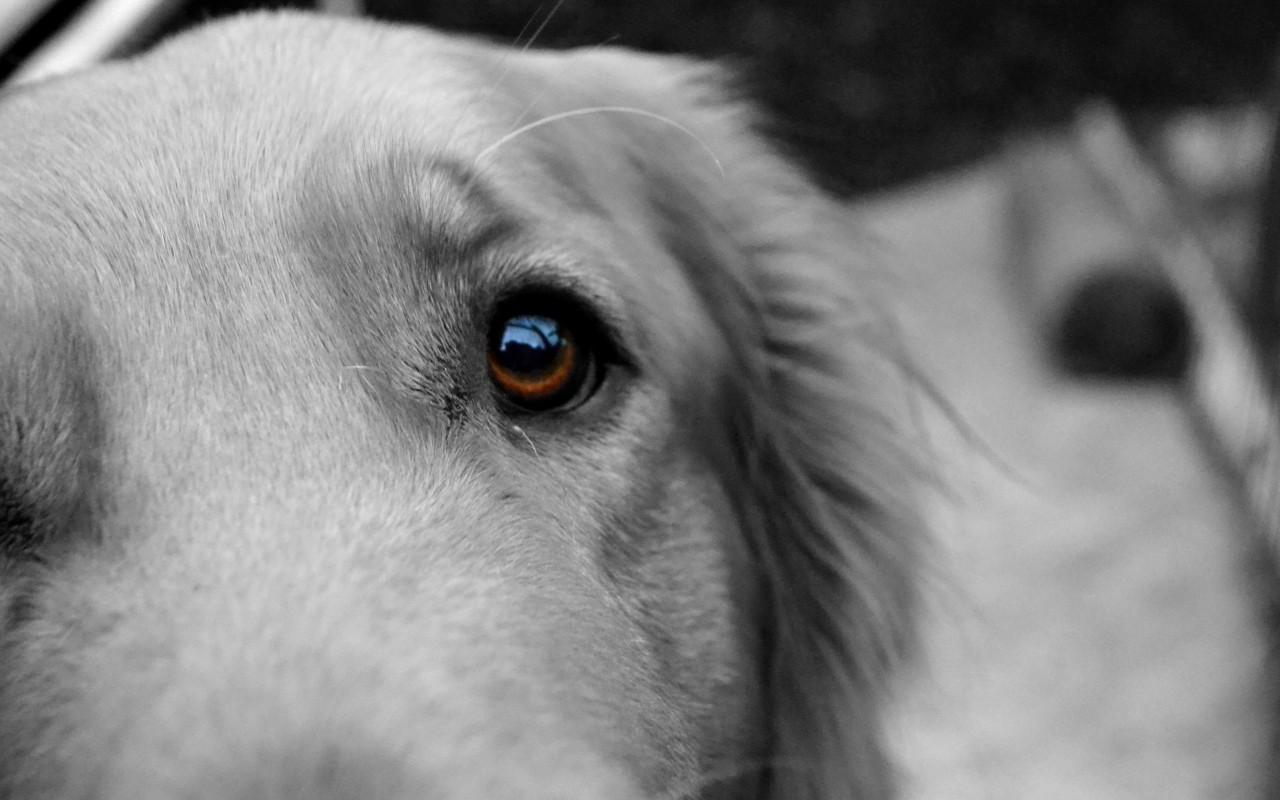 animal eyes wallpaper hd