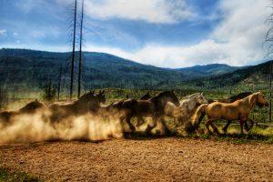 animal herd nature