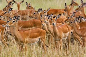 animal herd wallpapers