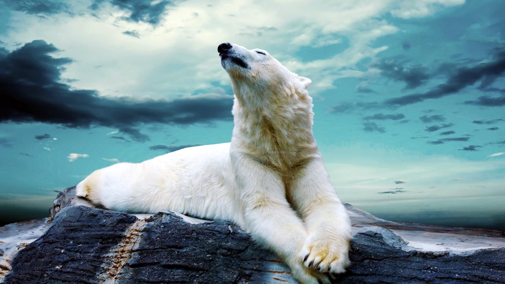 animal wallpaper chilling
