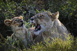animal wallpapers angry