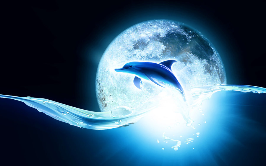 animated dolphin wallpaper  Wallpaper