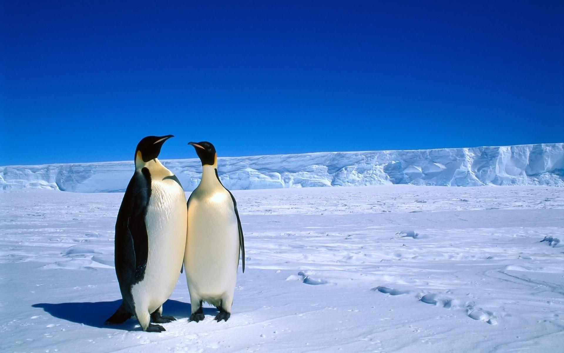 antarctica wallpaper
