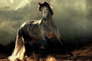 arabian horse beautiful