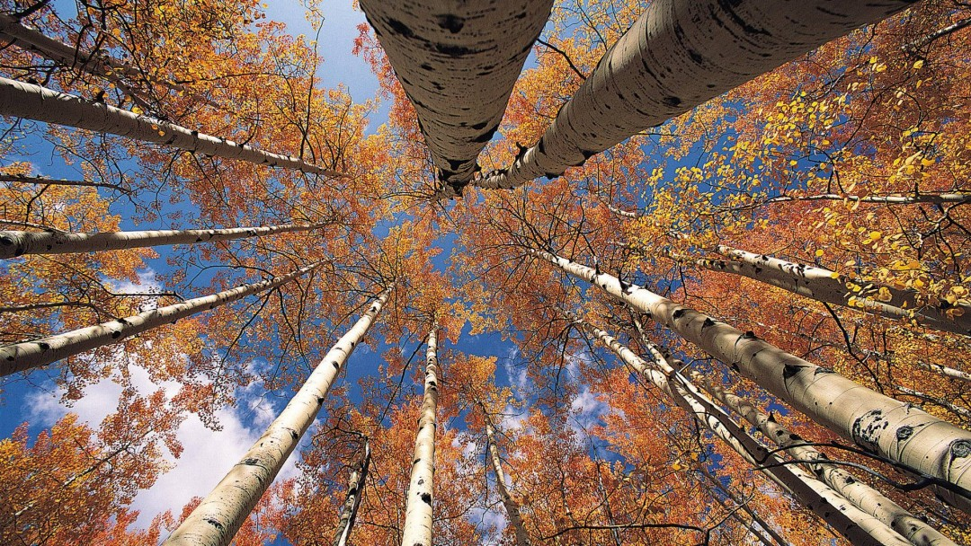 aspen wallpaper backgrounds bing images