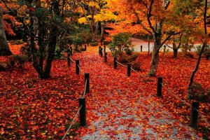autumn background images