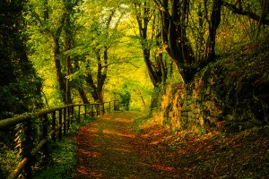 autumn beautiful jungle