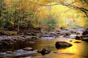 autumn beautiful river
