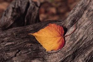 autumn desktop backgrounds