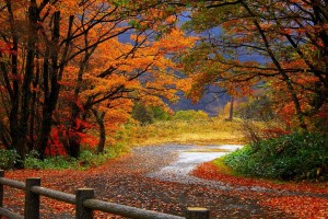 autumn hd wallpapers