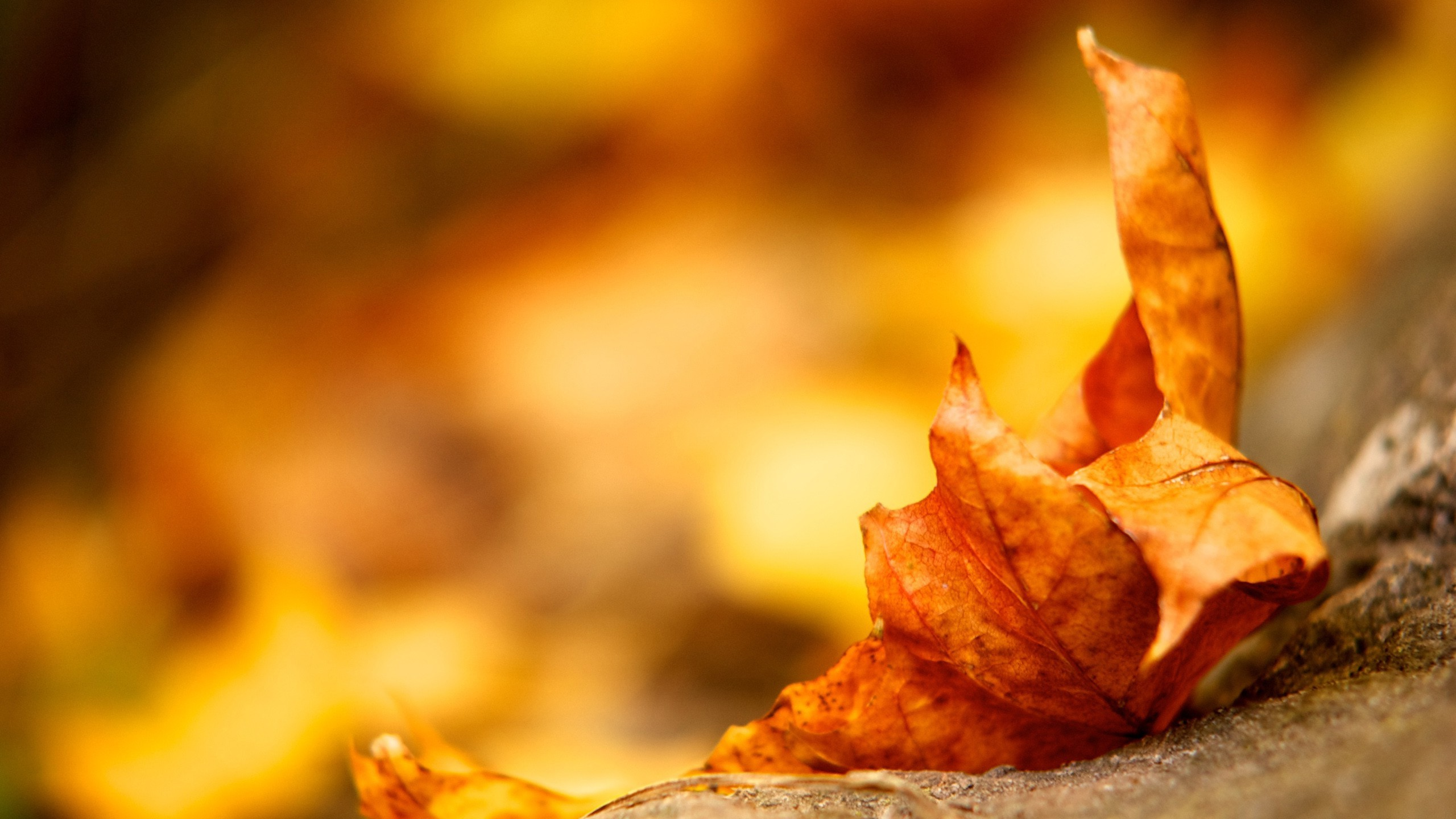 Fall leaves wallpaper free