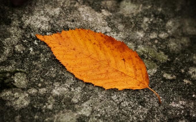 autumn leaves beautiful