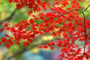 autumn leaves beautiful hd