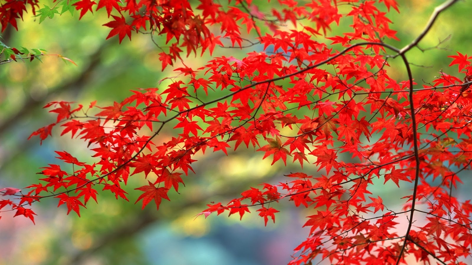 autumn leaves beautiful hd
