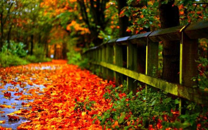 autumn leaves nature