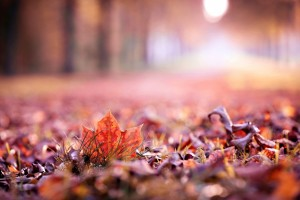 autumn leaves photography hd