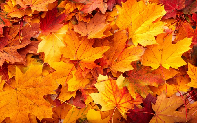 autumn leavesbackground