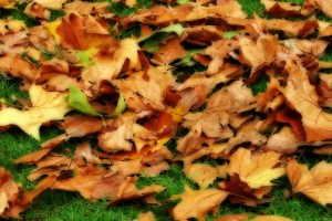 autumn pictures leaves