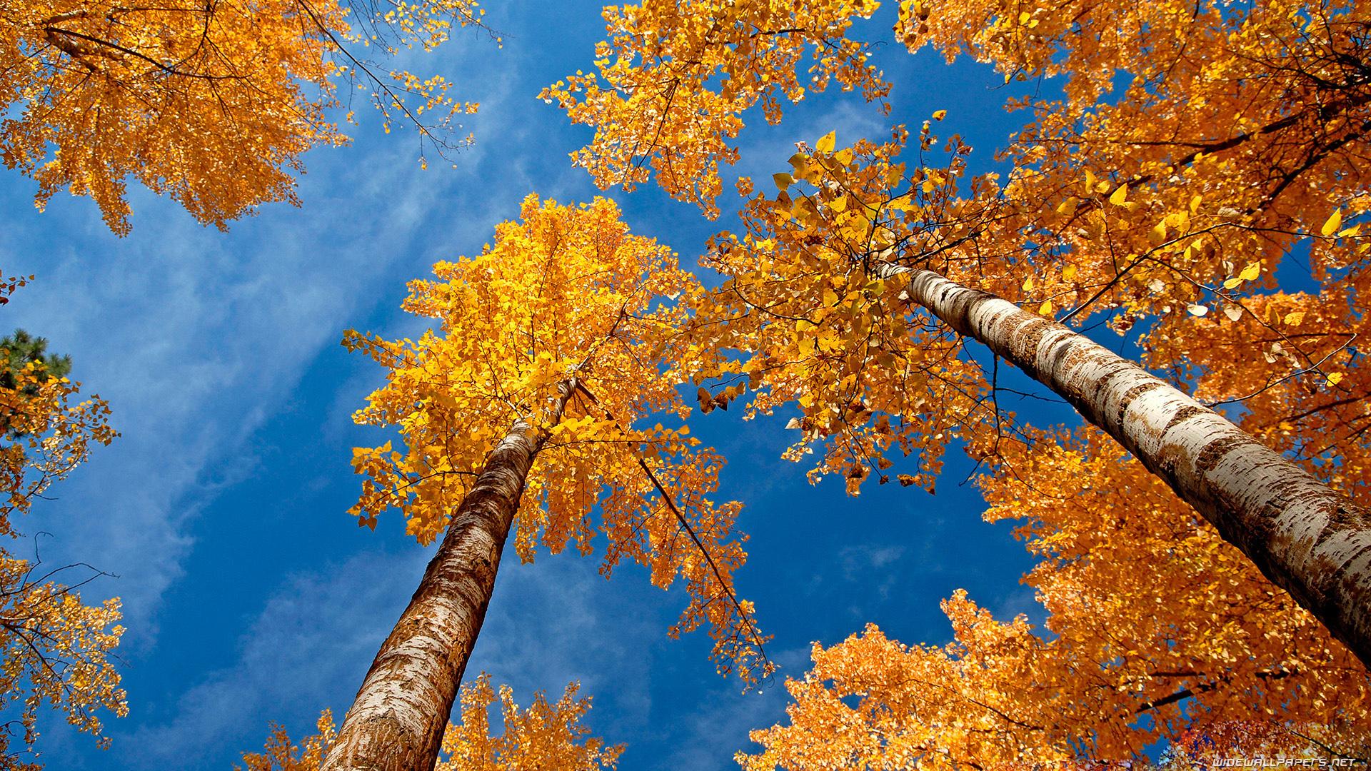 autumn trees pictures