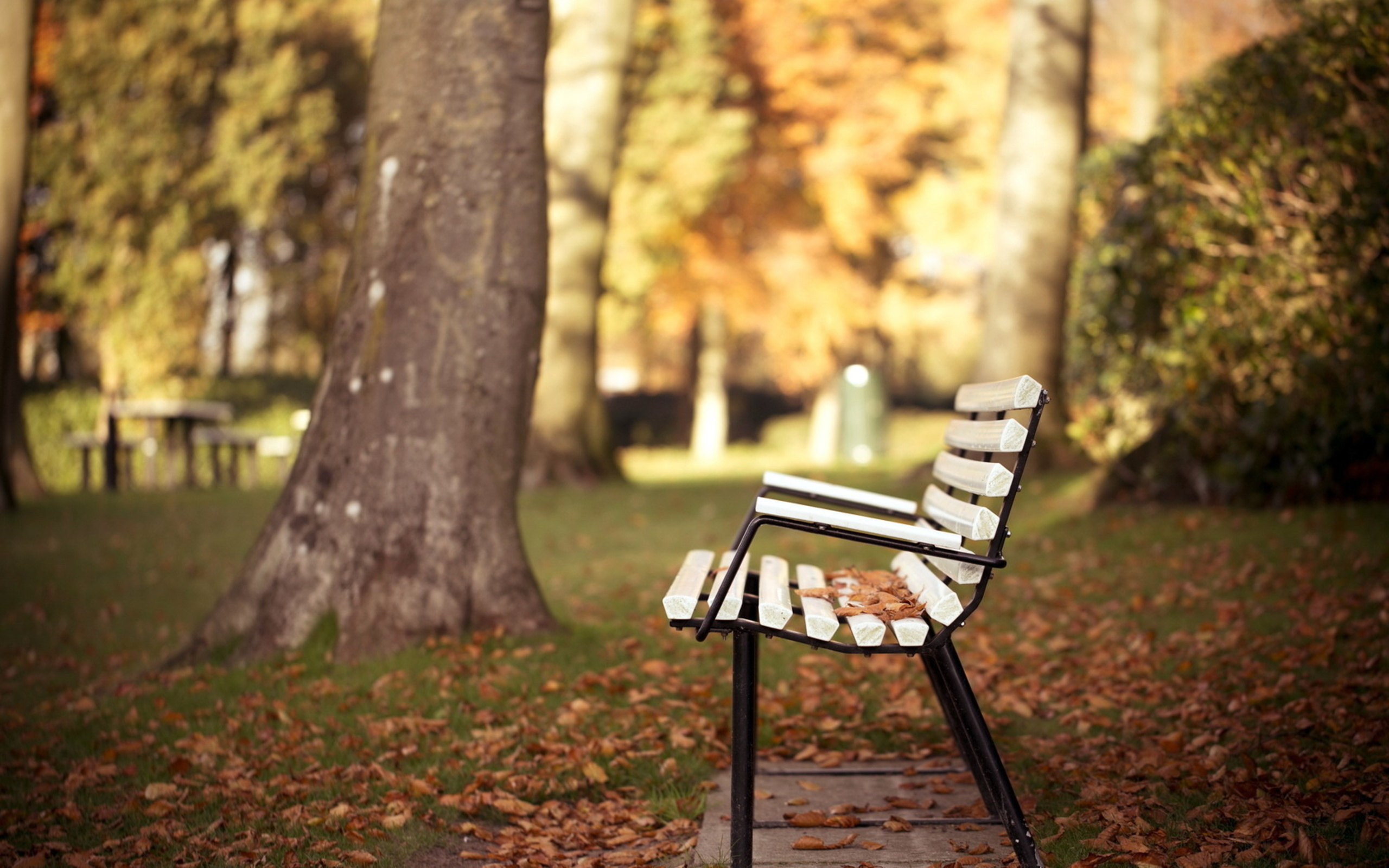 autumn wallpaper bench