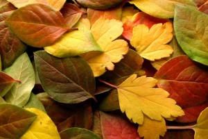 autumn wallpaper colors