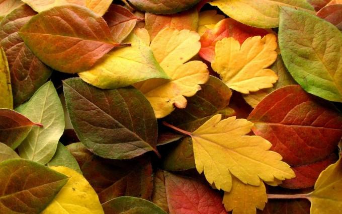 autumn wallpaper colors