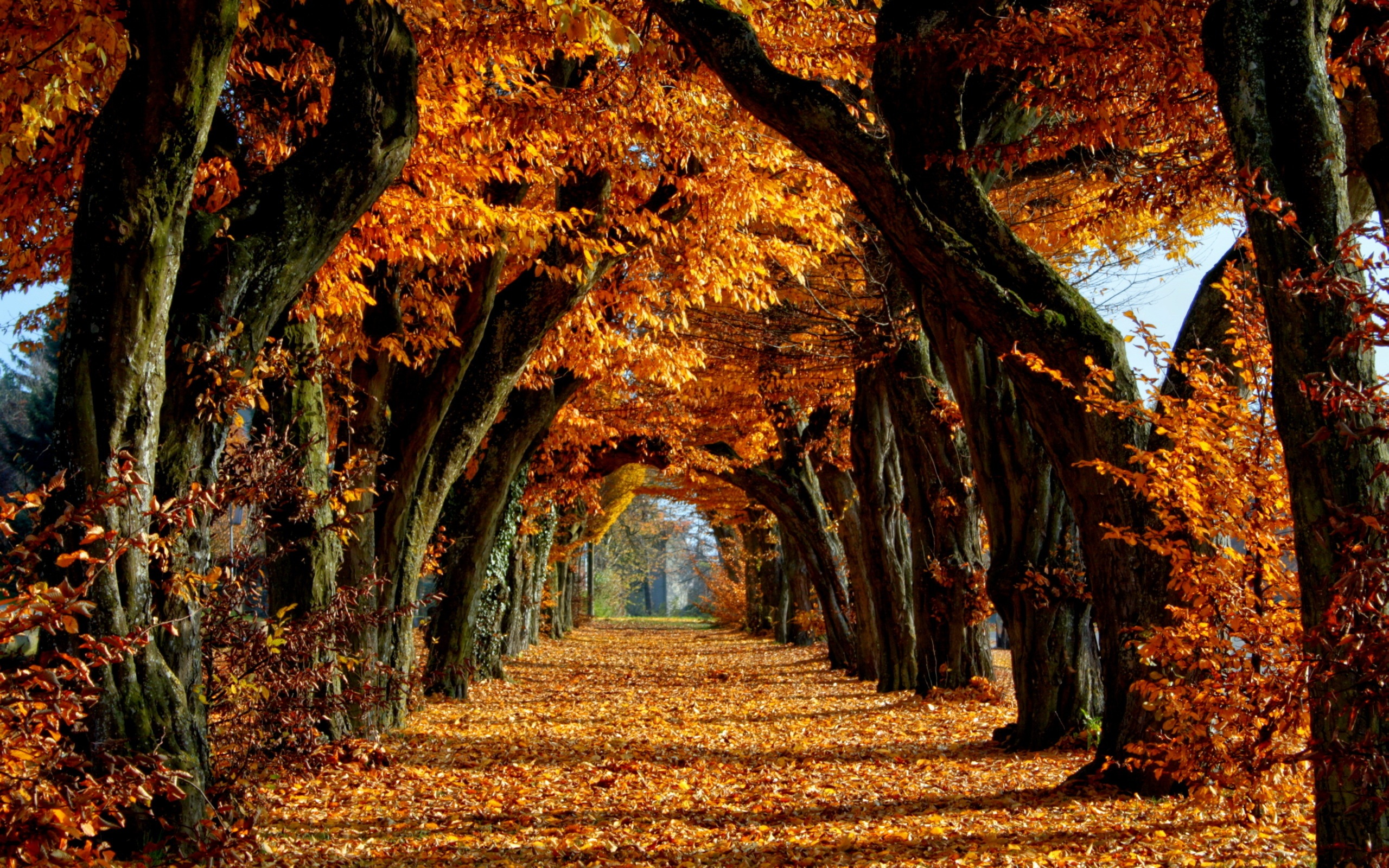Autumn Wallpaper Country