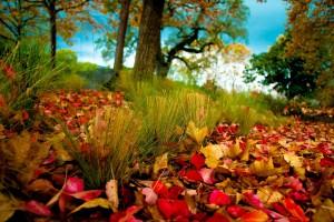 autumn wallpaper landscape