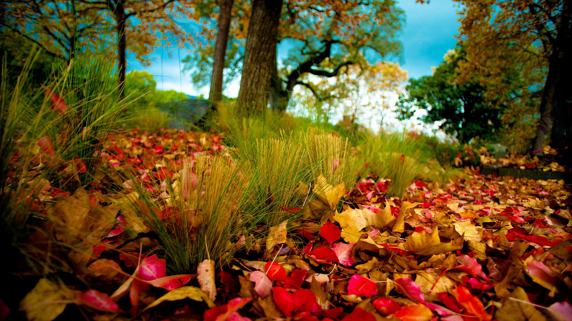 autumn wallpaper landscape