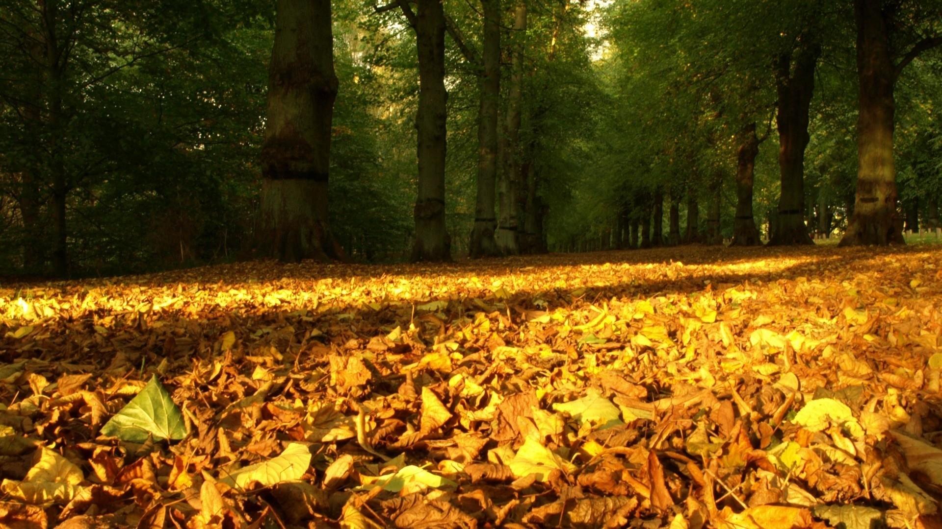 autumn wallpaper leaves